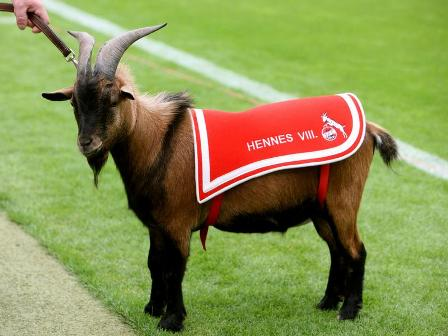 Hennes Fc